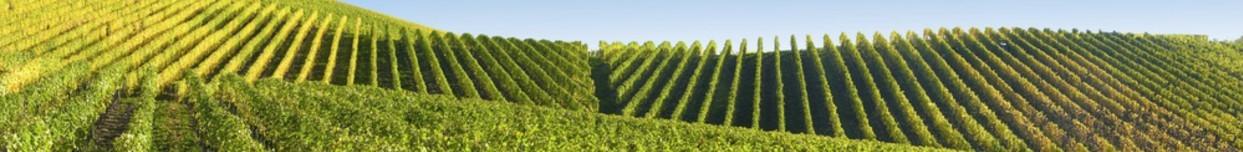 vigne-2
